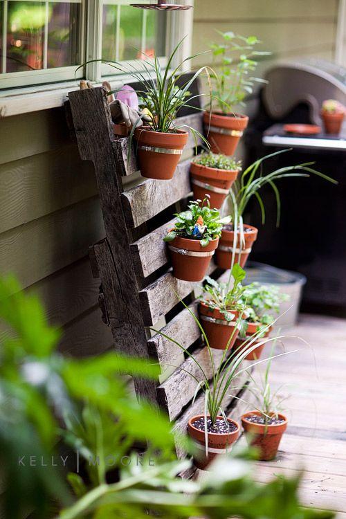 zest piante