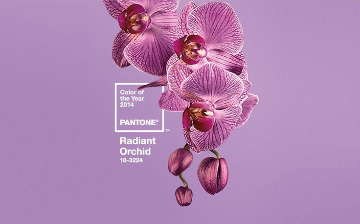 pantone COY-2014