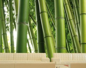 .amazon by mantiburi Carta da parati no.1 'PARADISE OF BAMBOO' 400x280cm