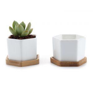amazon-vaso-cactus