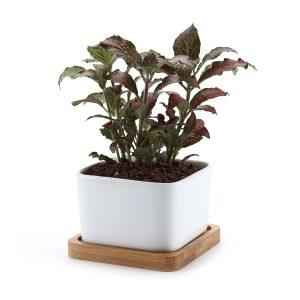 amazon-vaso-cactus-vassoio