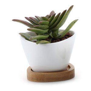 amazon-vaso-cactus-vassoio-bambu