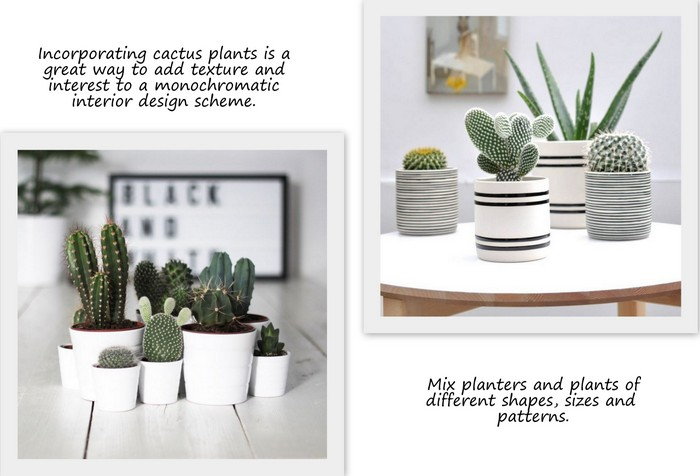 bianco-e-nero-interior_styling_monochromatic_color_scheme_with_cactus_plants_via_design_lovers_blog