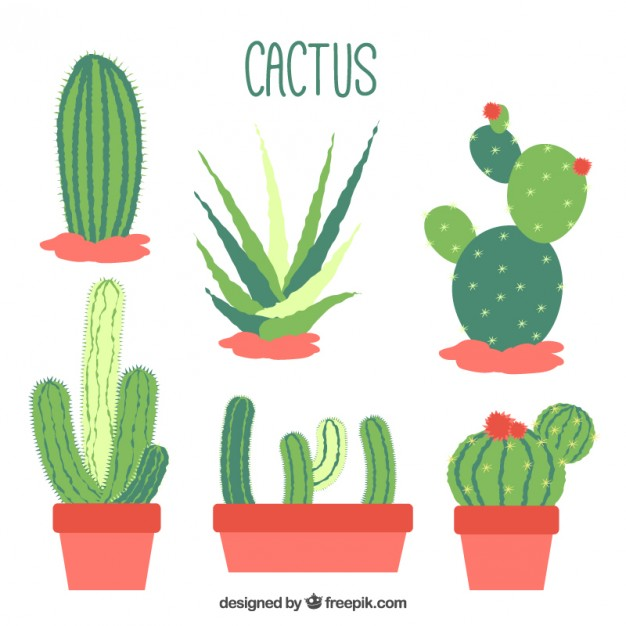 immagine-flat-design-cactus-collection_23-2147547024