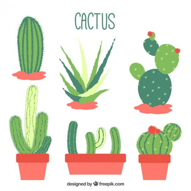 immagine-flat-design-cactus-collection_23-2147547024