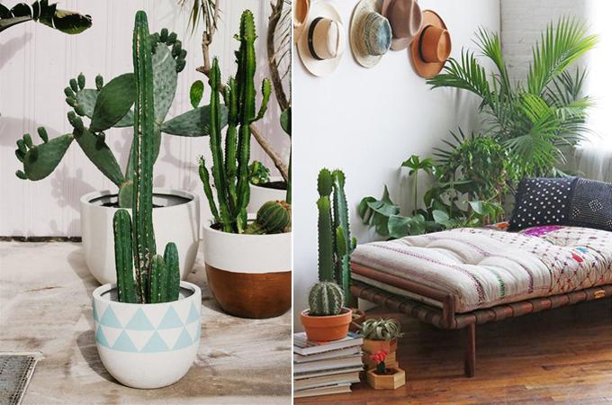 immagine-succulent-cactus-interior-design-styling-www-ellymacdonalddesign-com5_
