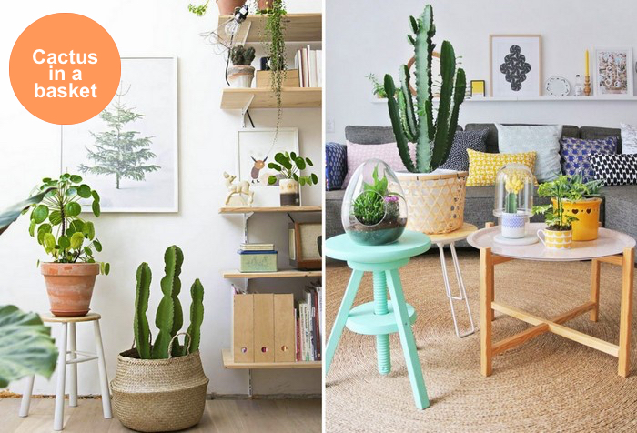 mix-display_cactus_in_a_basket_via_design_lovers_blog