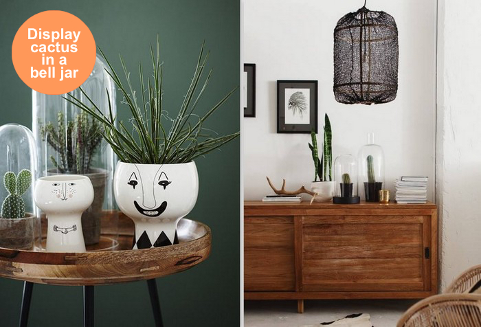 mix-styling_cactus_in_bell_jar_via_design_lovers_blog