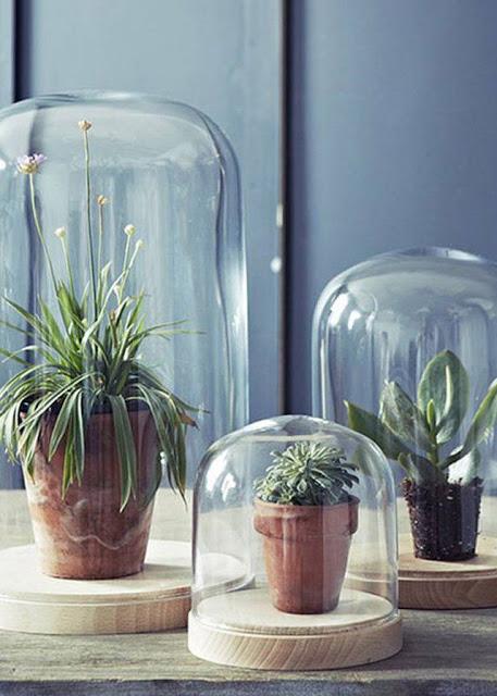 pianta-piantine-varie-2