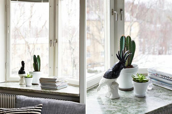 piante-cactus-in-workspace-2