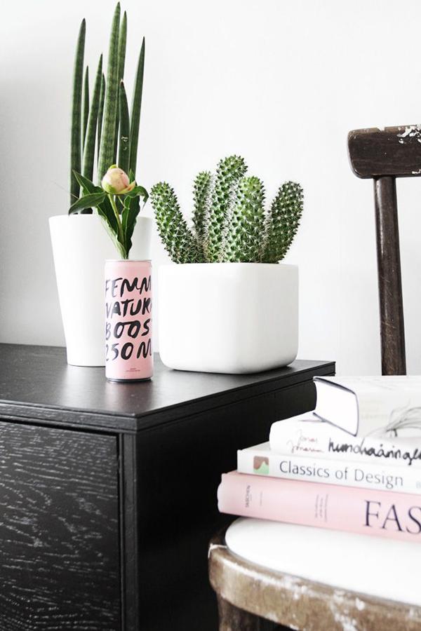 piante-cactus-interior-ideas