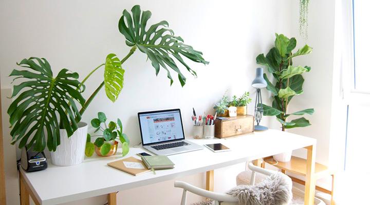 piante-arredare_ufficio_con_piante