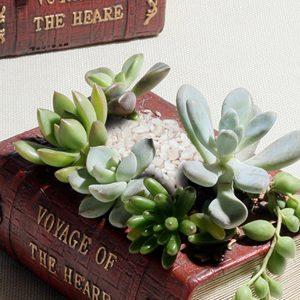 amazon-libro-dellannata-fiore-di-sedum-piatto-succulento-letto-fioriera-bonsai-attraverso-scatola-impianto