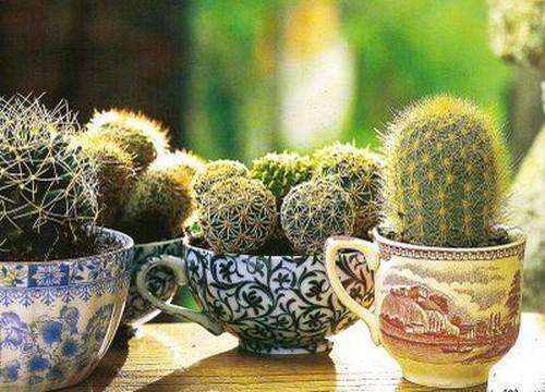 boho-chic-piante-grasse-tazza