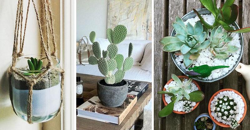 cactus-arredare-con-le-piante-grasse