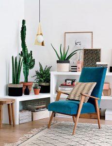 cactus-casa-nordica