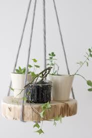hanger-plant-images-1