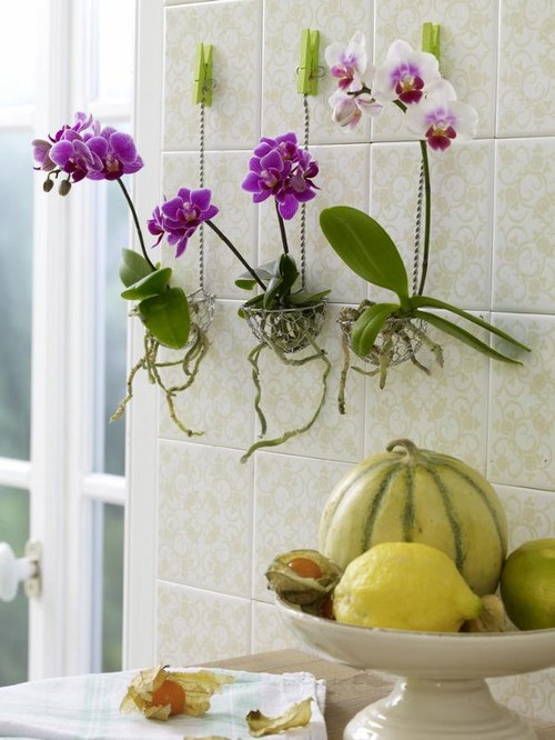 orchid-home-design