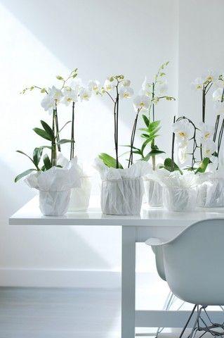 orchidea-6eb48867ba0c0dfe1d979d3aa12a0a5b