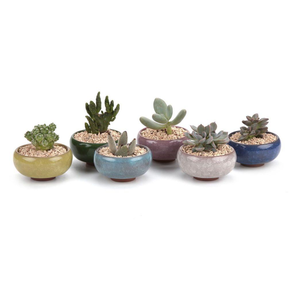 contenitori piante grasse