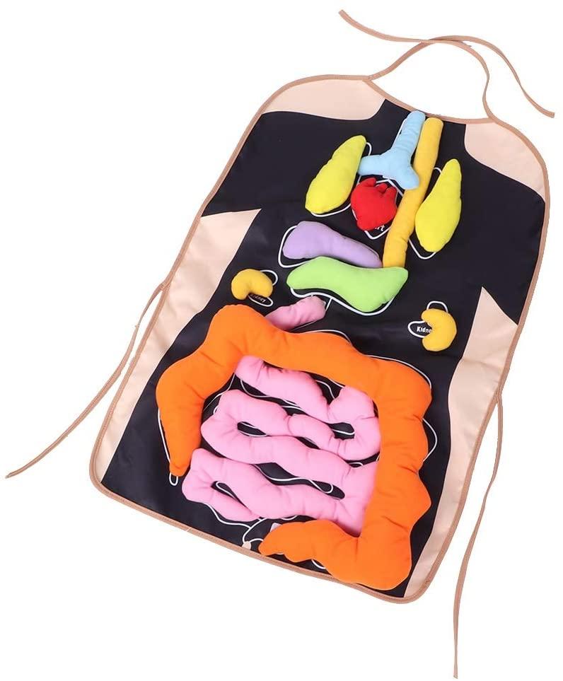 Design per bambini nel Museo dei diritti dell'infanzia - image amazon-Fydun-Grembiule-di-Organo-Peluche-Anatomia-di-Grembiuli-3D-Organi-del-Corpo-Umano-Grembiule-fisiologico-Giocattolo-di-consapevolezza-per-Bambini on http://www.designedoo.it