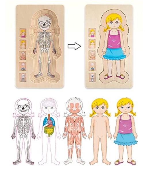 Design per bambini nel Museo dei diritti dell'infanzia - image amazon-Giocattolo-Educativo-Giocattolo-Puzzle-Struttura-del-Corpo-Umano-Giocattolo-Puzzle-in-Legno-Multistrato-Giocattolo-Educativo-Precoce-Giocattolo-in-Mattoni-di-Legno-per-Bambini- on http://www.designedoo.it