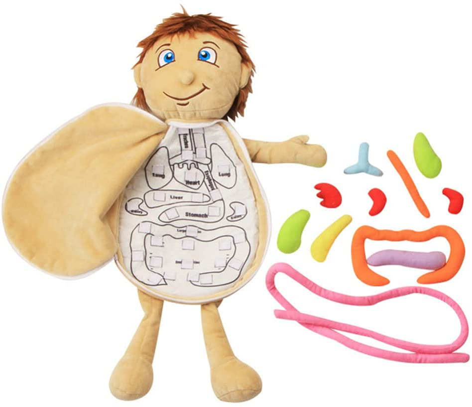 Design per bambini nel Museo dei diritti dell'infanzia - image amazon-Toddmomy-Corpo-Umano-Anatomia-Giocattolo-Educativo-Organo-Giocattoli-di-Peluche-3D-Organo-di-Puzzle-Giochi-di-Organi-del-Corpo-Umano-Consapevolezza-in-et%C3%A0-Prescolare-Strumento-Giocattolo2 on http://www.designedoo.it